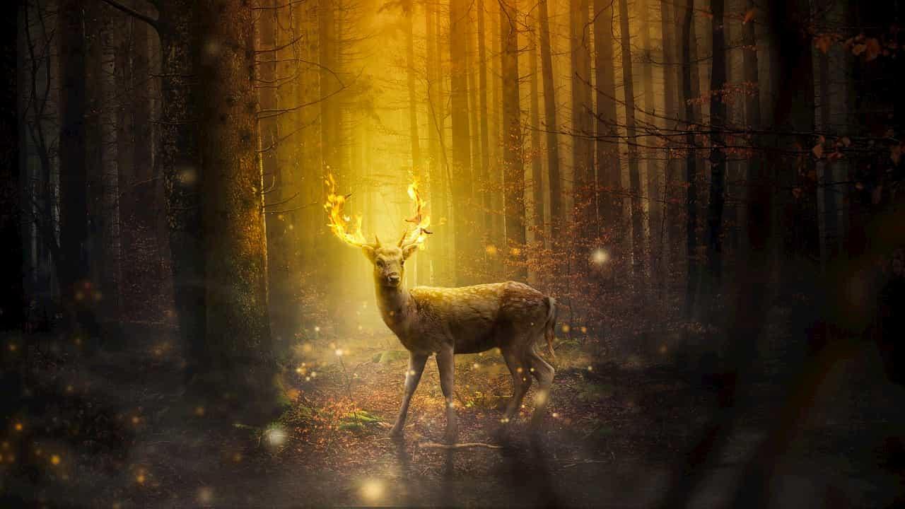 林の中で振り返る鹿