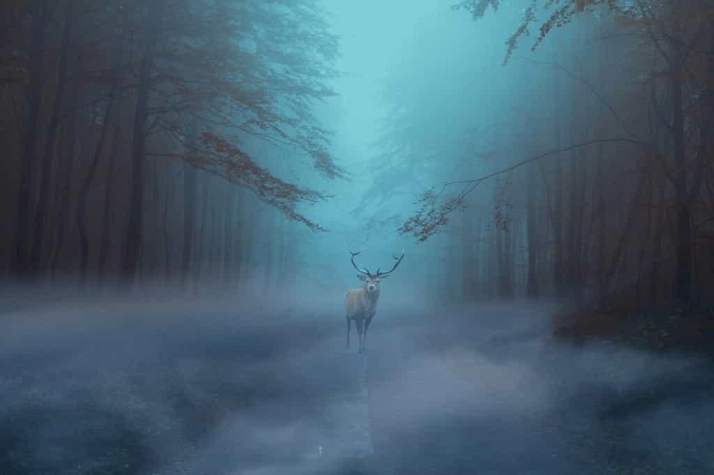 夜の霧の中を歩く鹿