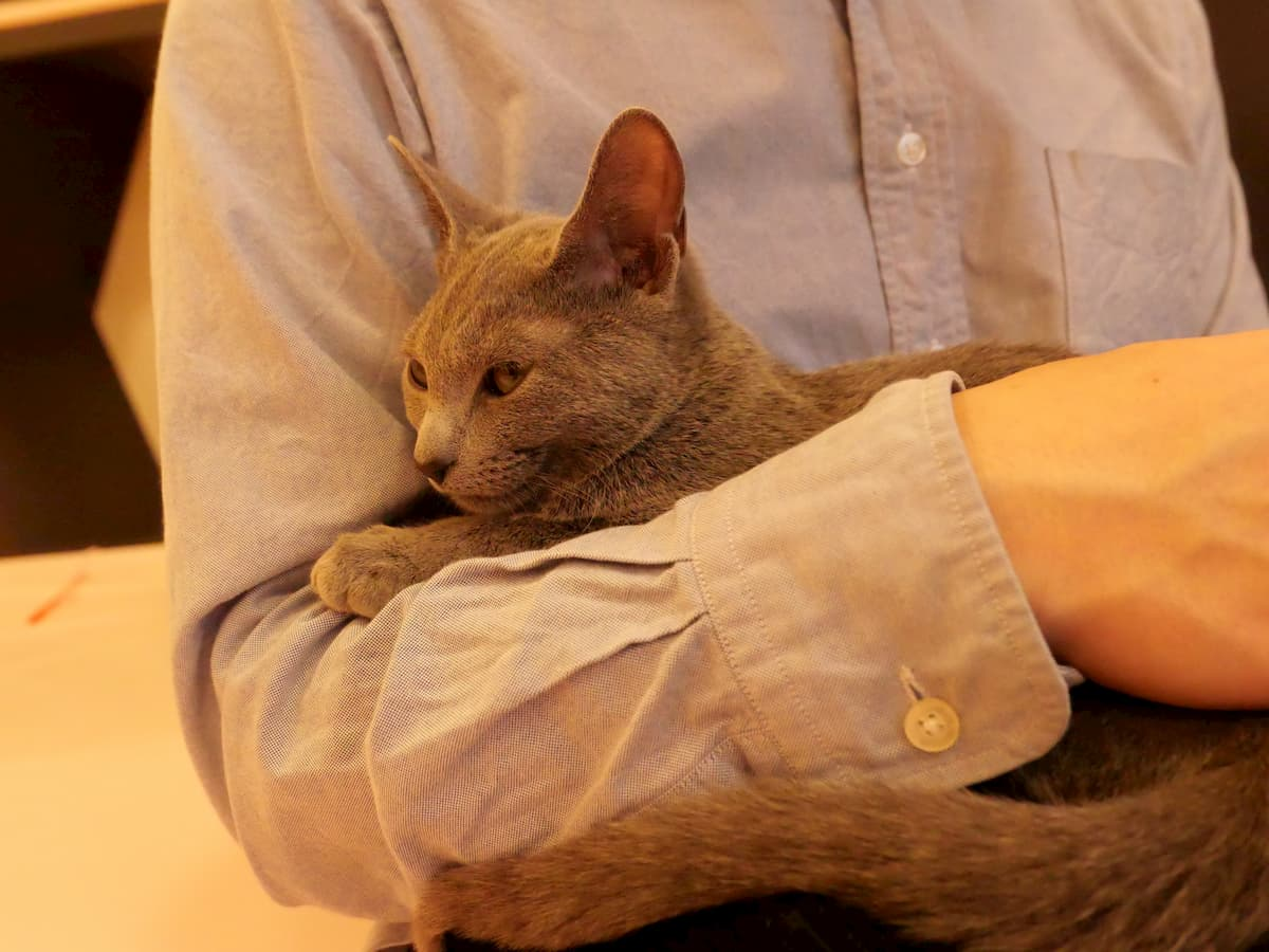 手に乗る猫